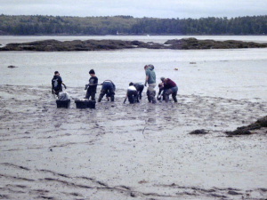 Working to save clams from European green crab--Woolwich Central School